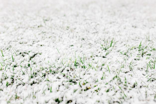 Grünes gras mit schnee bedeckt. schöner hintergrund. schnee
