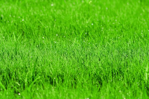 Grünes gras mit tautropfen