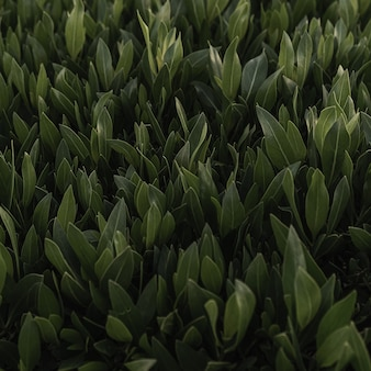 Grünes gras mustertextur