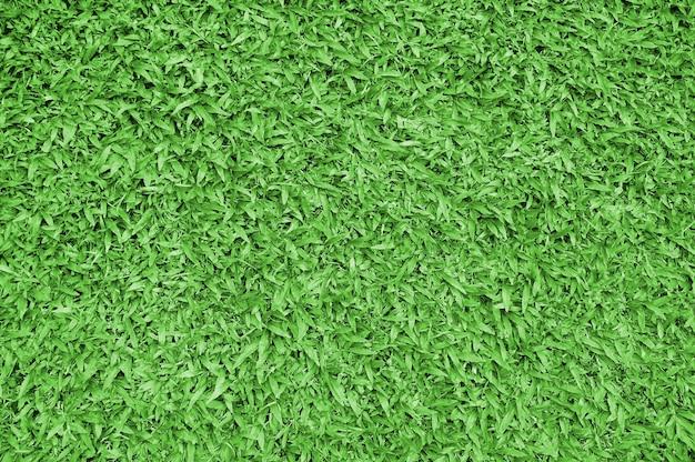 Grünes gras. natürliche hintergrundtextur. frisches frühlingsgrünes gras.