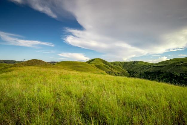 Grünes gras steigt sumba island indonesien foto