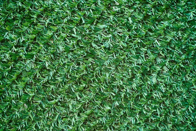 Grünes gras textur