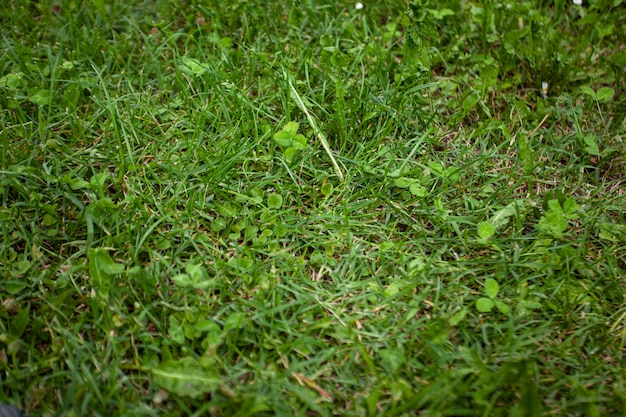 Grünes gras texturdetail aufgenommen mit makroobjektiv