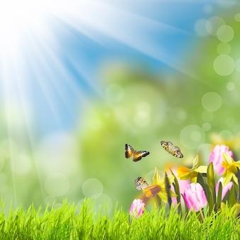 Grünes gras über frühlingsbokeh und sonnenlicht