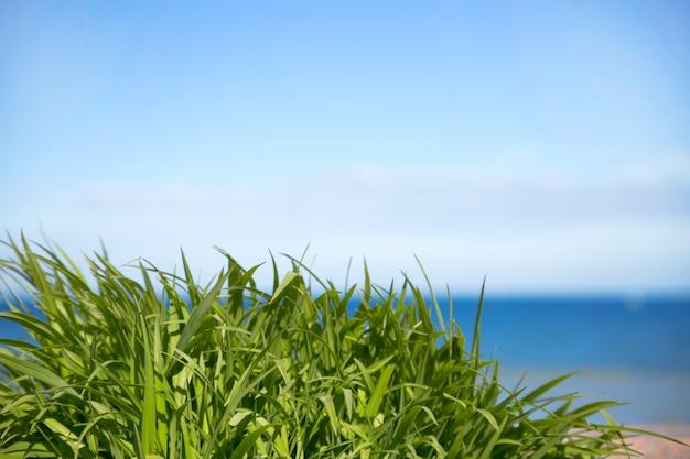 Grünes gras über seehintergrund und blauem himmel.