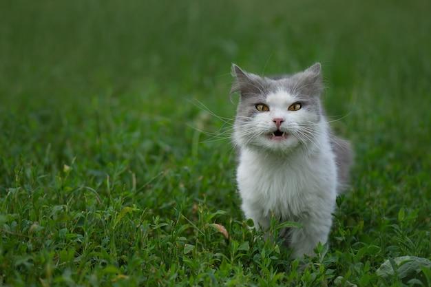 Grünes gras und katze. entzückende junge katze isst kraut im park auf der natur. lustige katze frisst gras.