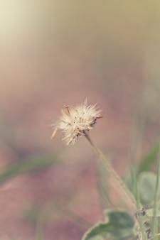 Grünes gras und kleine weiße blumen auf dem feld. schöne sommerlandschaft.