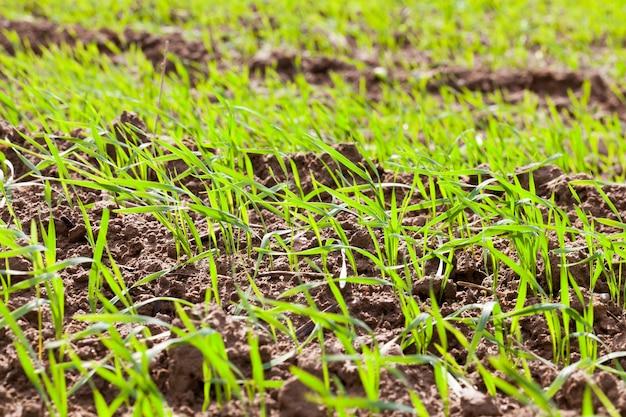 Grünes gras und pflanzen