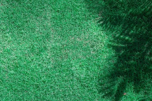 Grünes gras und schatten der zweige
