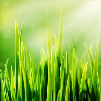 Grünes gras und sonne des neuen frühlinges