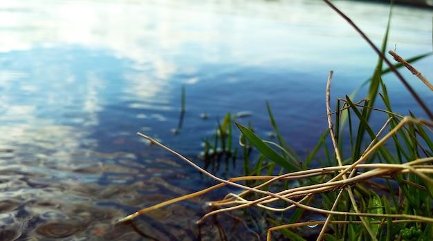 Grünes gras wächst am flussufer
