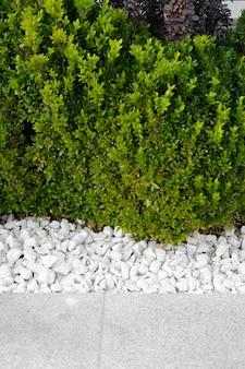 Grünes gras wächst auf dem rasen zwischen dekorativen steinen, landschaftsbau. nahaufnahme