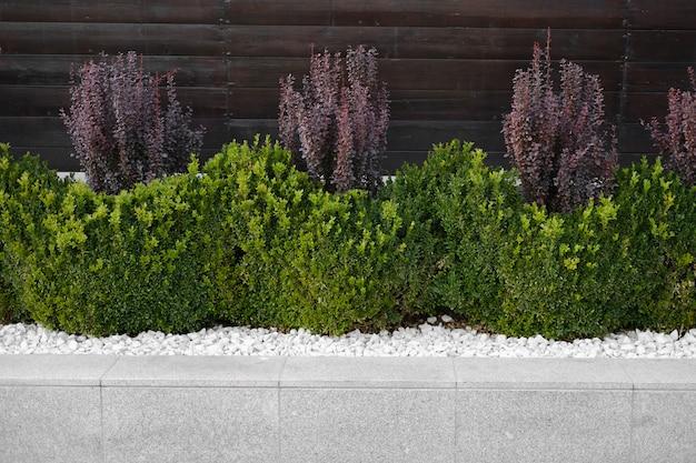 Grünes gras wächst auf dem rasen zwischen dekorativen steinen, landschaftsbau