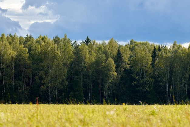 Grünes gras, wiesenfeld, waldhintergrund