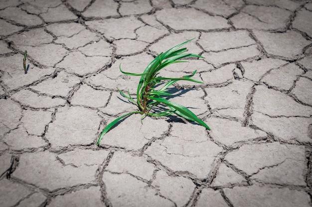 Grünes gras wuchs auf trockenem, rissigem boden