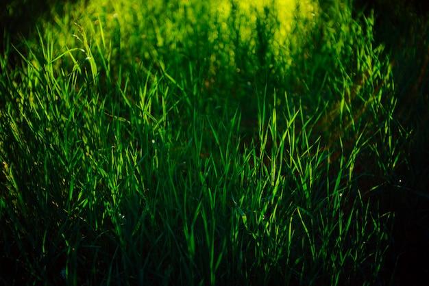 Grünes gras.
