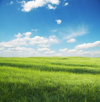 Grünes grasland und weiße wolken
