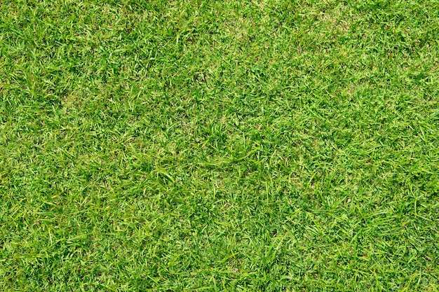Grünes grasmuster und beschaffenheit für hintergrund. nahaufnahmebild.