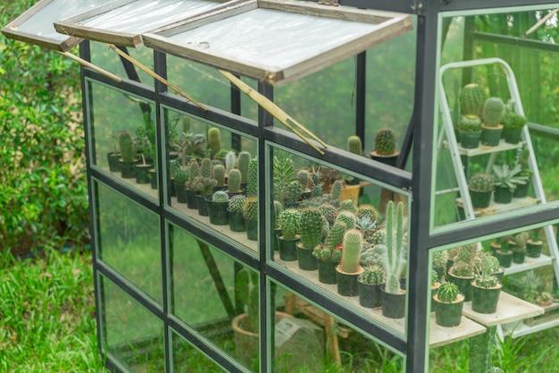 Grünes haus der nahaufnahme im hausgarten, kaktuskindertagesstätte pflanzend.