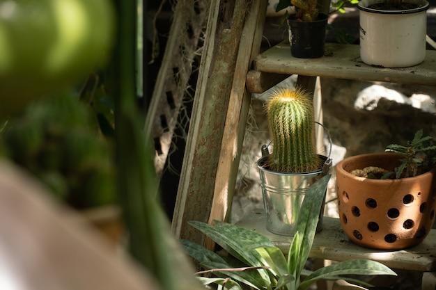 Grünes haus für den kaktus, der wachstum pflanzt. glashaus für die gartenarbeit.