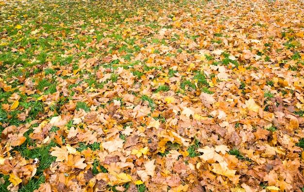 Grünes helles gras bedeckt mit gelbem trockenem laub, das während des laubfalls von bäumen gefallen ist