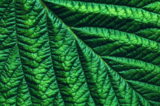 Grünes klares blattmakrofoto, abstrakter botanischer strukturierter hintergrund