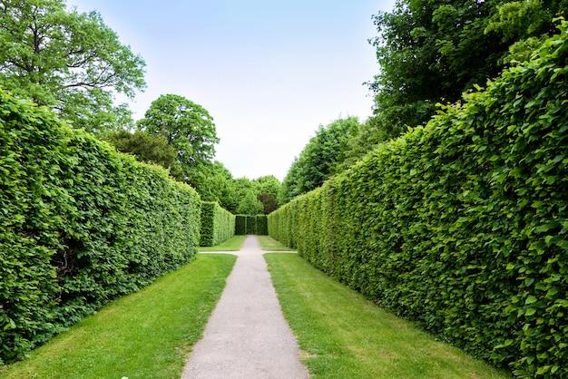 Grünes labyrinth im schönbrunngarten