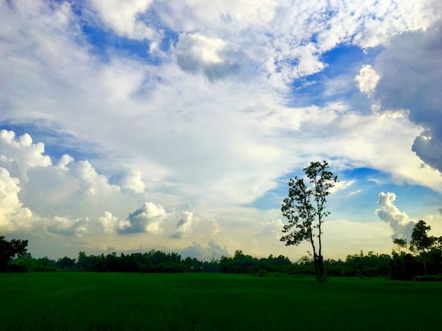 Grünes land mit schönem himmel und wolken
