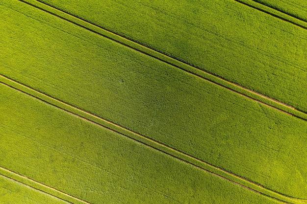 Grünes landwirtschaftliches feld von oben mit streifen, abstraktes natürliches muster