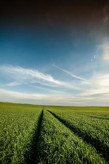 Grünes landwirtschaftsfeld im frühsommer