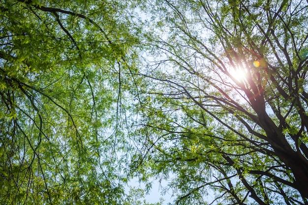 Grünes laub, baum und weiches licht im waldherbst