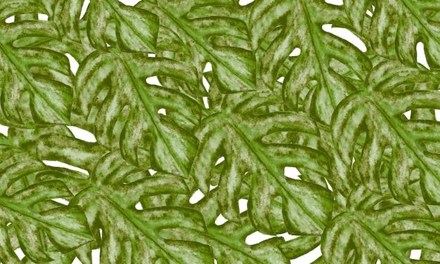 Grünes monstera verlässt frühlingsnaturhintergrund