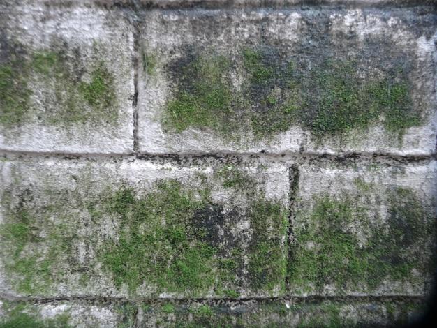 Grünes moos an der wand