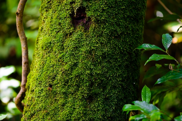 Grünes moos auf dem baumhintergrund