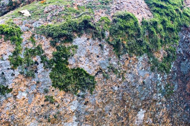 Grünes moos auf dem stein. natur hintergrund
