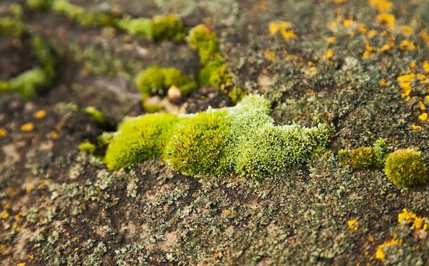 Grünes moos auf dem stein.