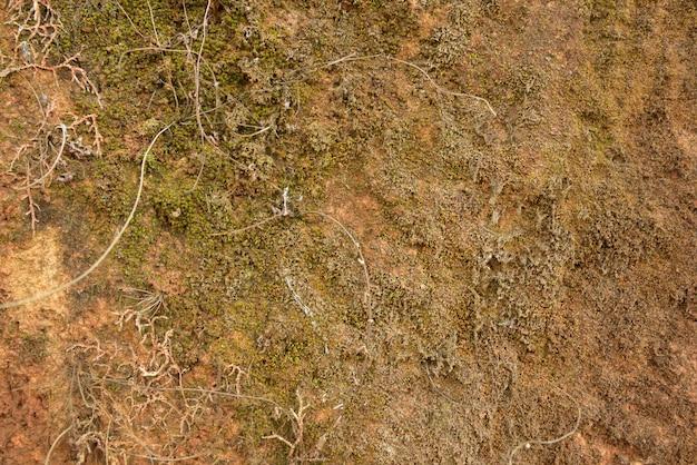 Grünes moos auf steinbeschaffenheit und -hintergrund