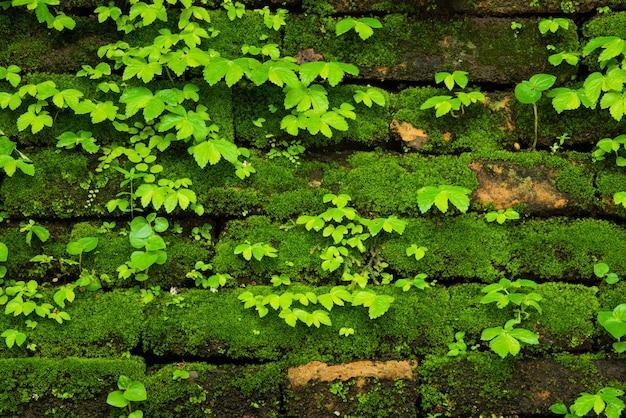 Grünes moos, das auf alter backsteinmauer wächst