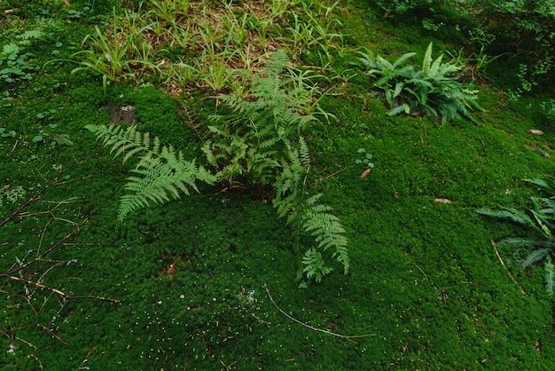 Grünes moos, das aufgewachsen ist, bedeckt die rauen steine im wald. mit makroansicht anzeigen. felsen voller moos.