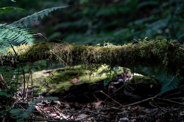 Grünes moos im wald, bewachsen über stämmen
