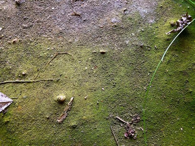 Grünes moos in stein