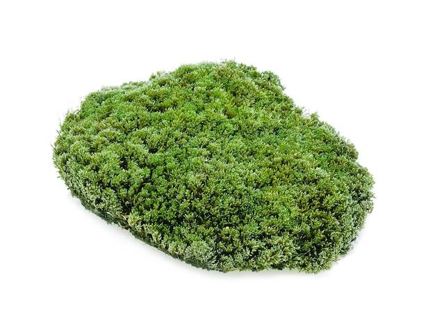 Grünes moos lokalisiert auf weiß