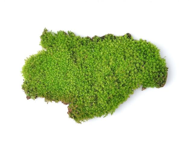 Grünes moos lokalisiert auf weißem backgrund