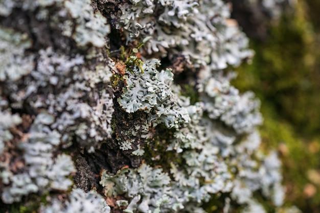 Grünes moos und flechte wächst auf einer baumstammnahaufnahme.