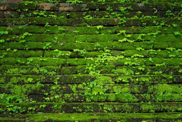 Grünes moos wächst auf alten mauer