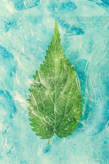 Grünes natürliches blatt in wasser oder kaltem getränk. healty food-konzept. minimale naturwand. flach liegen.