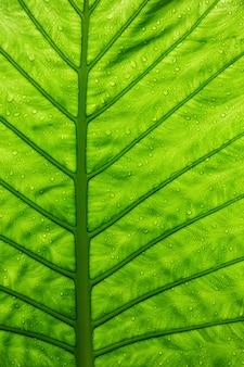 Grünes ökologisches konzept, grünes blatt