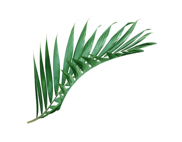 Grünes palmblatt der tropischen natur isoliertes muster