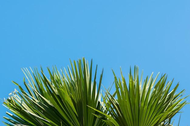 Grünes palmblatt ein blauer himmel