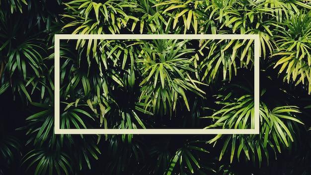 Grünes palmblatt im wald